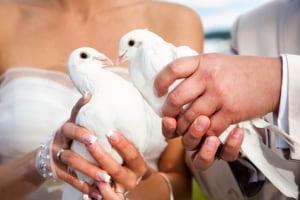 Firma na wesele: Białe Gołębie Na Ślub